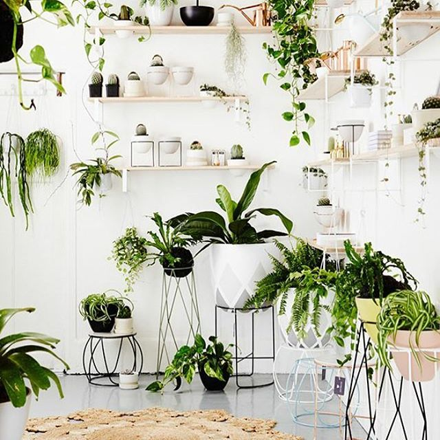 With research from NASA we've collected a range of plants that purify your air. Check out our site for further information and get your plants delivered to your door today LA! #plantsdelivered #midcenturymodern #nasa