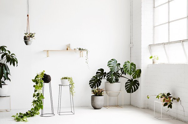 Add a little pop of colour to any room with a bit of life. Our plants offer natural air purifying benefits. Check our site for a breakdown of what they can do for your air quality #plants #houseplants #midcenturymodern