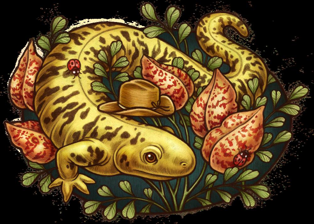 KateOHaraBestOfRenoSalamander.png