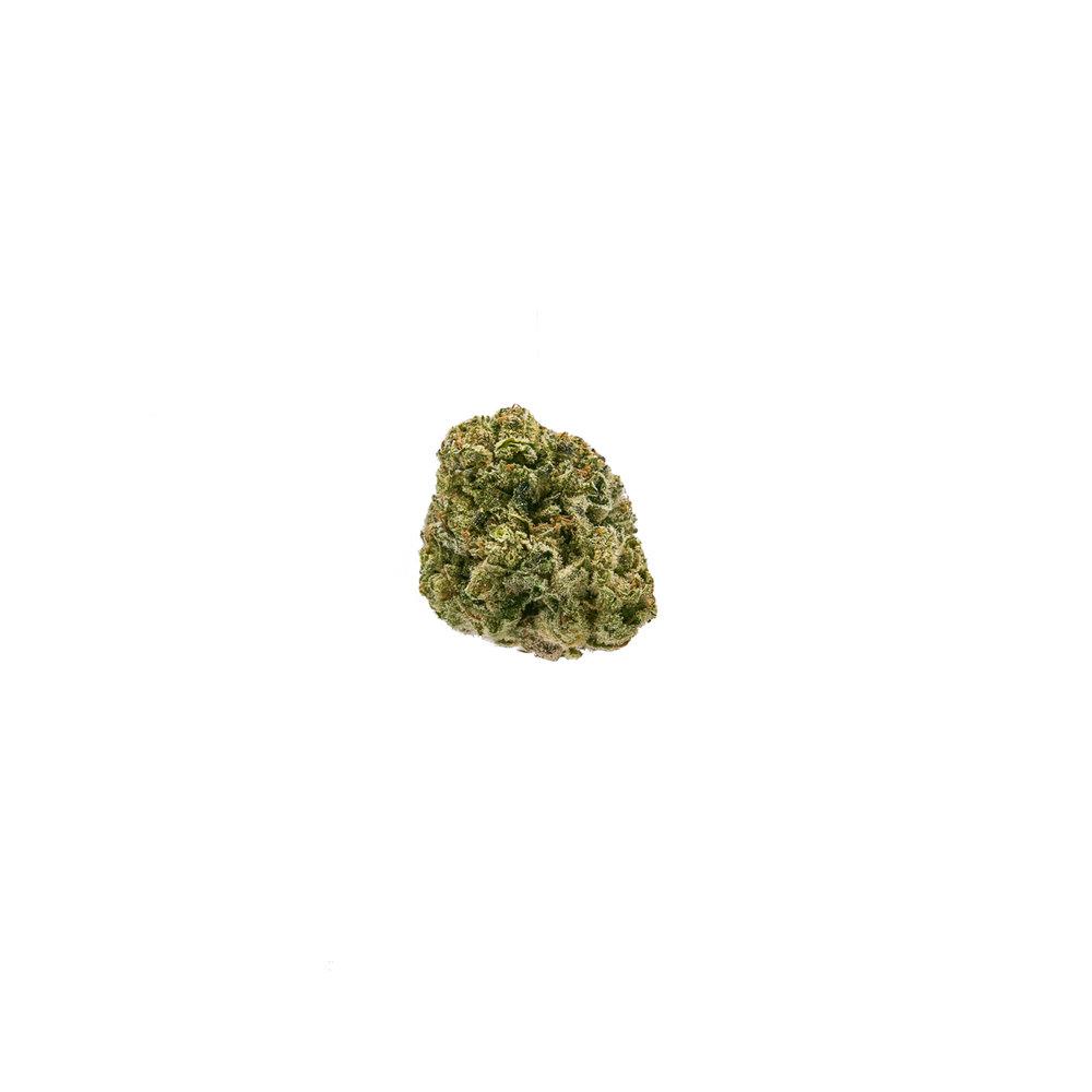Chocolope(6).jpg