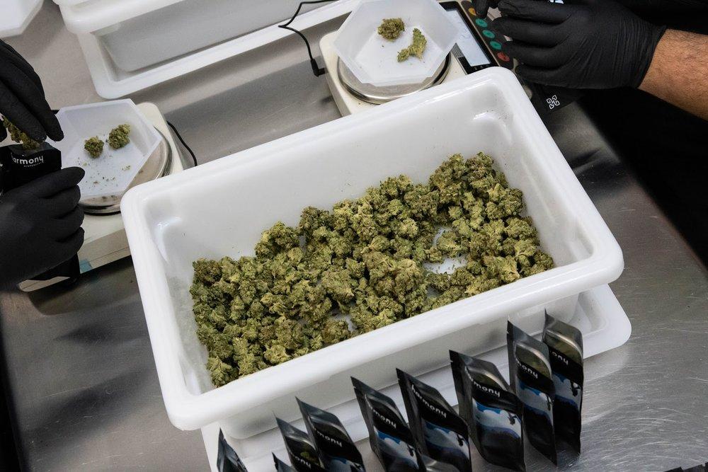 2019_02_06_Packaging_BlackBags_Cultivation_Flowering_Harmony_Dispensary_Cannabis_Marijuana_02.jpg