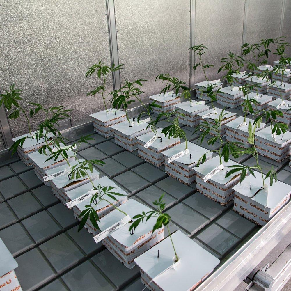 _IG_2018_10_09_Cultivation_Harmony_Dispensary_Cannabis_Marijuana_01.jpg