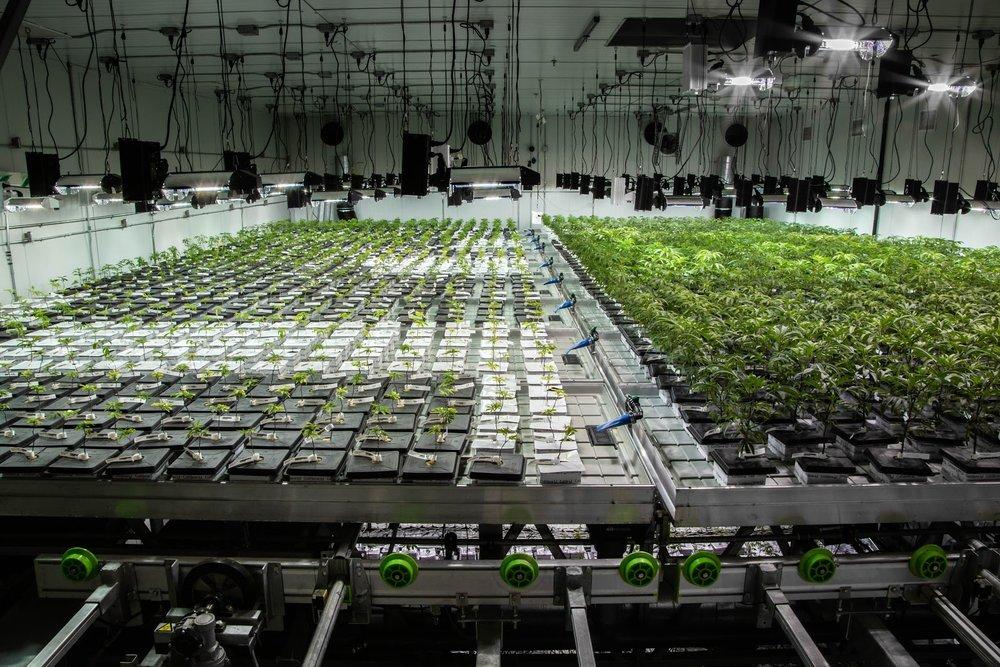 2019_01_27_Veg_Cultivation_Flowering_Harmony_Dispensary_Cannabis_Marijuana_01.jpg