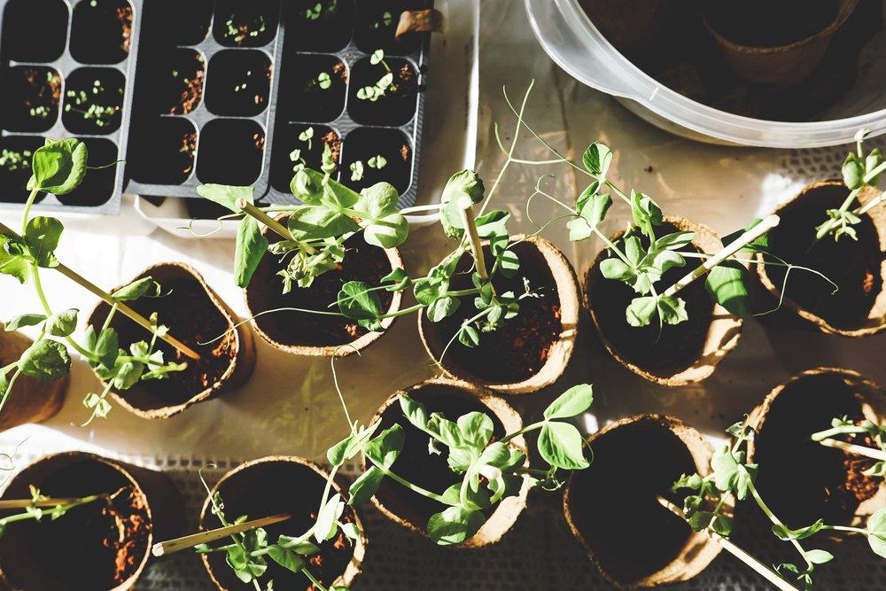 garden-growth-leaves-1105019.jpg
