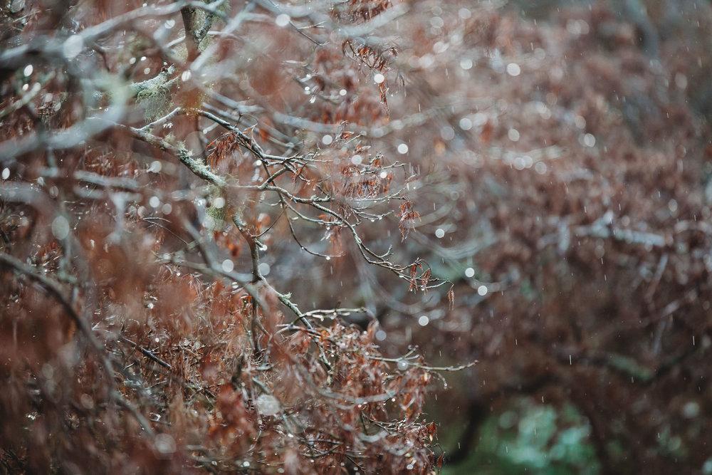 ALIANDDAMOWEDDING-BETHFERNLEYPHOTOGRAPHY-649.jpg