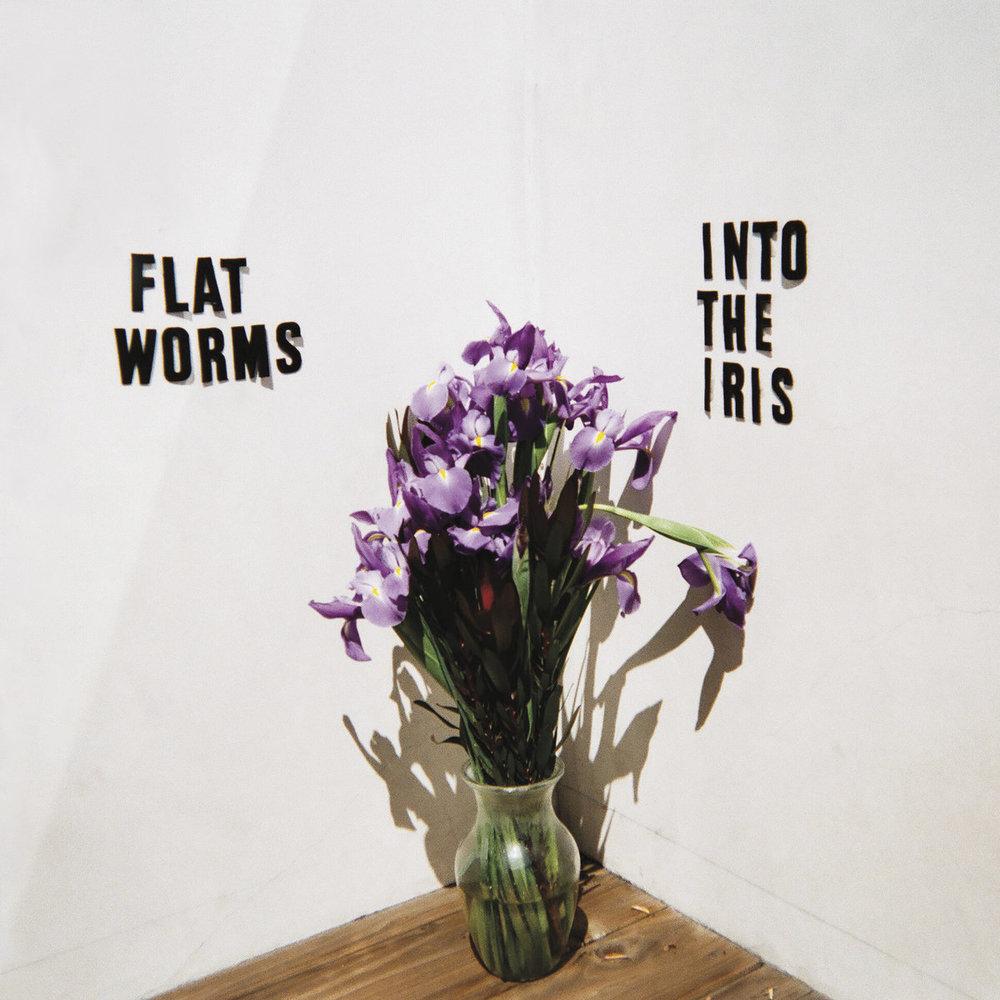 flat worms.jpg