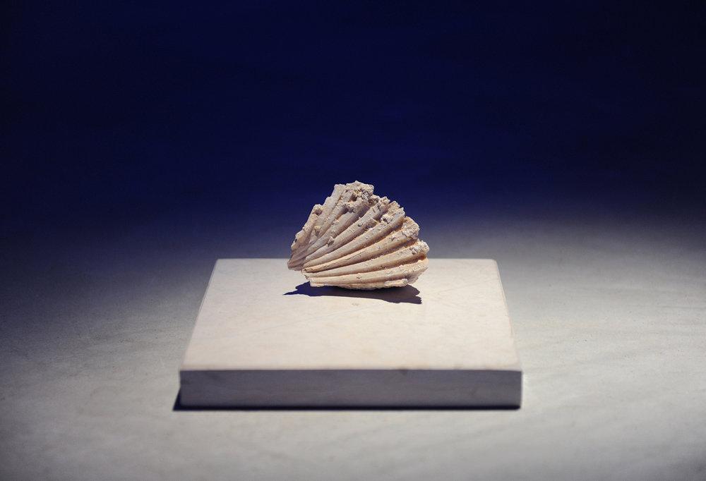 Intimacies (Mediterranean Civilization) , 2017, detail: carved Turkish marble, limestone fossil