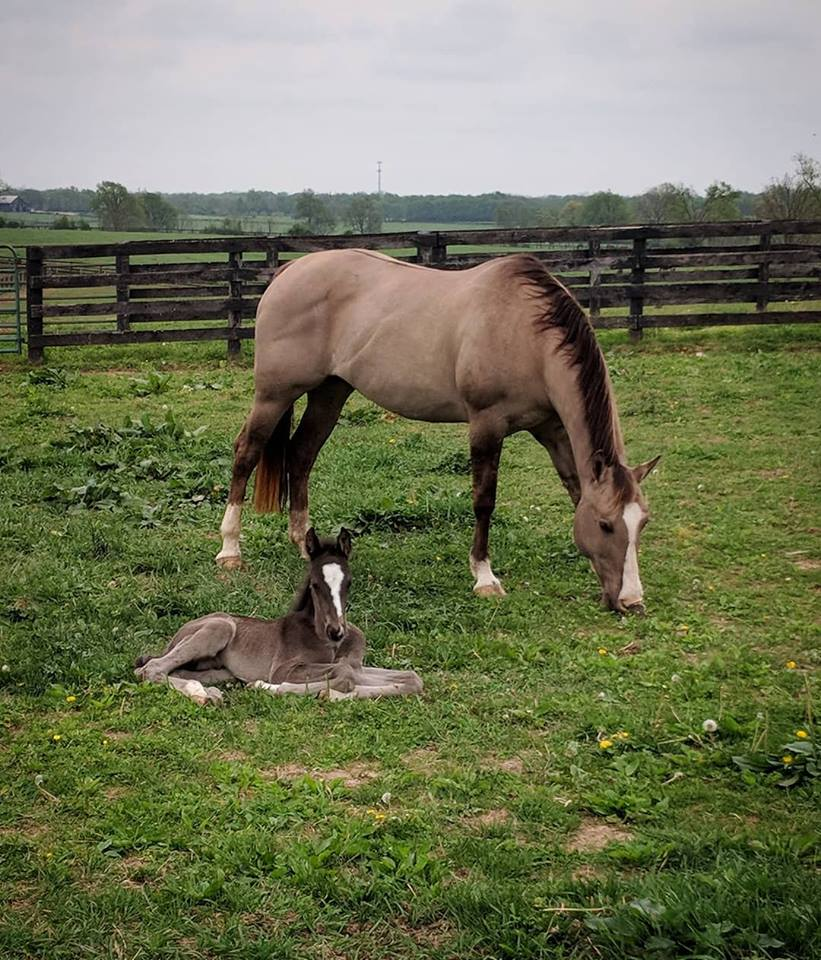 Tiny baby horse with teeny, tiny nose. And mom.