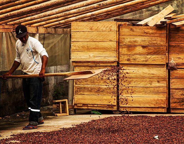Nuestro #cacao se seca naturalmente al sol ☀️. El ingrediente principal para hacer el chocolate más fino , son las manos que los hicieron 🍫😏 #handsmadechocolate . . . . . . . . . #llankhaychocolate #llankhay #internationalchocolateawards #academyofchocolate #drying #cocoa #sun #finechocolate #craftchocolate #ecuador #ecuadorian #ecuadorianfood #chocolate #chocolat #chocolatemaker #chocolover #art #backstage #themakingof #finefood #artisanalchocolate #2018 #fairtrade #comerciojusto #raw #rawcacao @bystevemolina