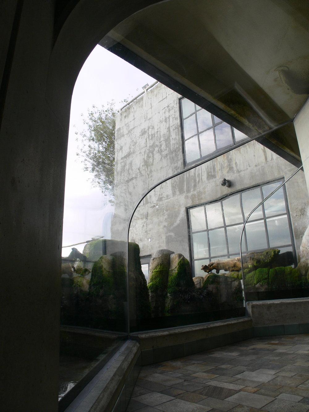 tidepool wave window4.JPG