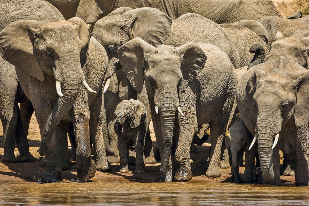 KWCA_Elephants.jpg