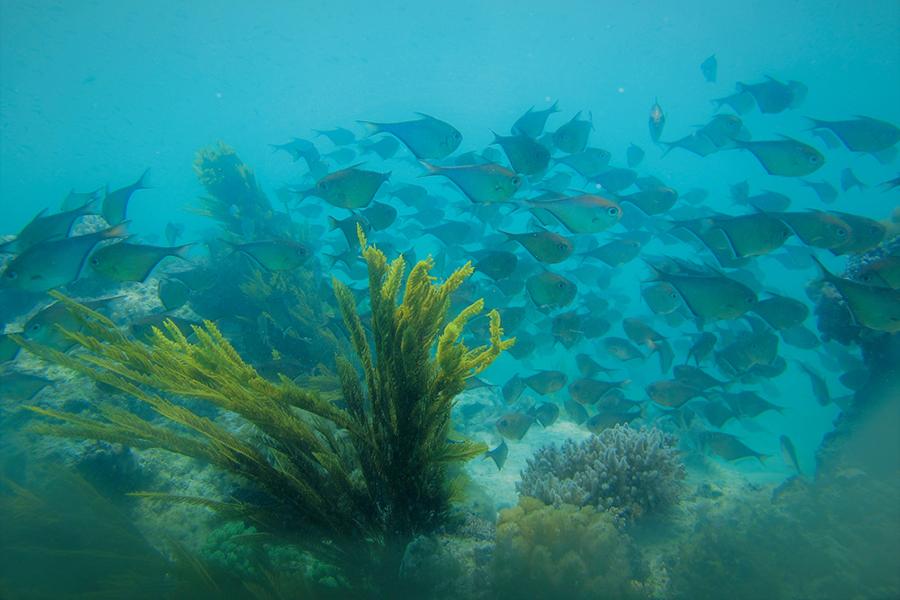 Mwambao Coastal Community Network - TANZANIA | Leading Local Innovation in Marine Conservation