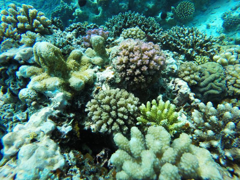 Mwambao_coral.jpg