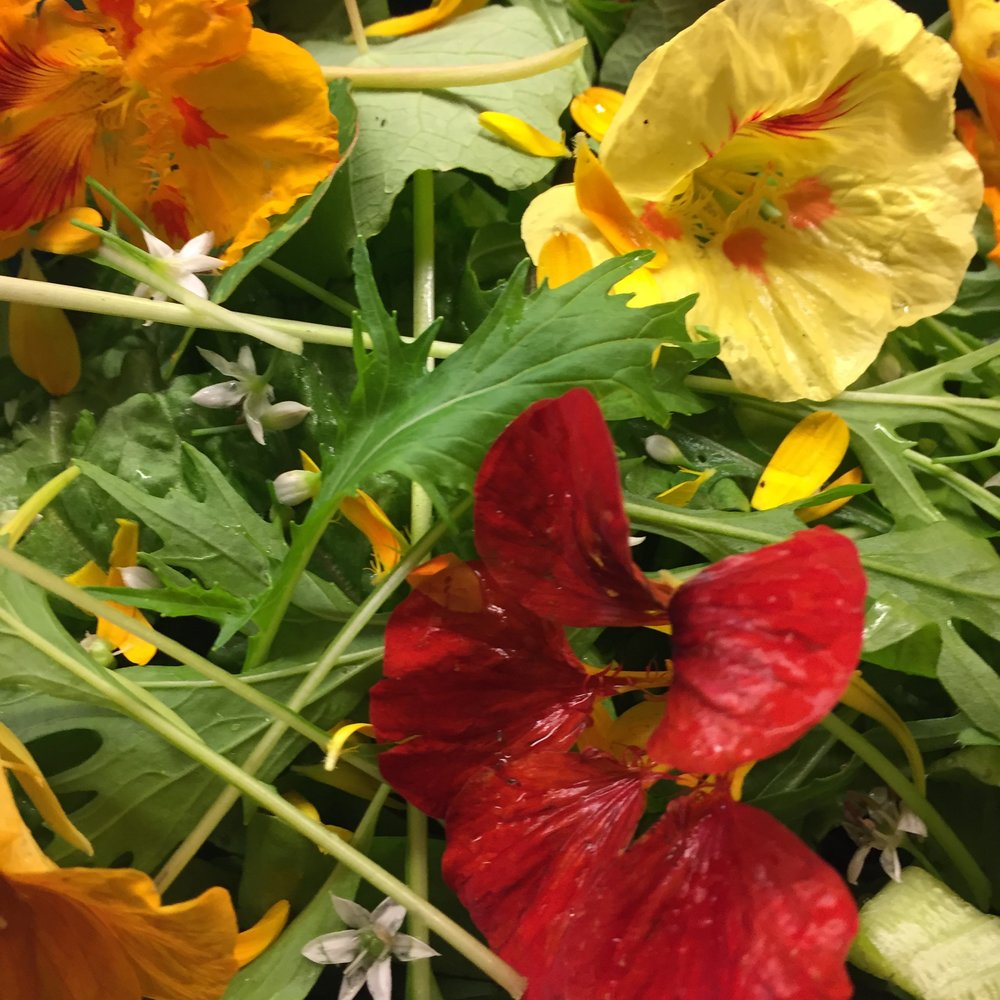 REF:99  'tropaeolum majus'  capucines (fleurs) NASTURTIUM flowers  NASTURTIUM flowers can be scattered over salads,and savoury dishes. add to pasta dough or spring rolls.