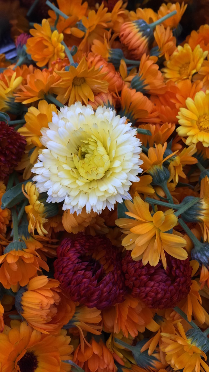 REF:14  'calendula officinalis'  calendula mixte  use flower petals in salads, both sweet and savory. infuse whole flowers in olive oil.