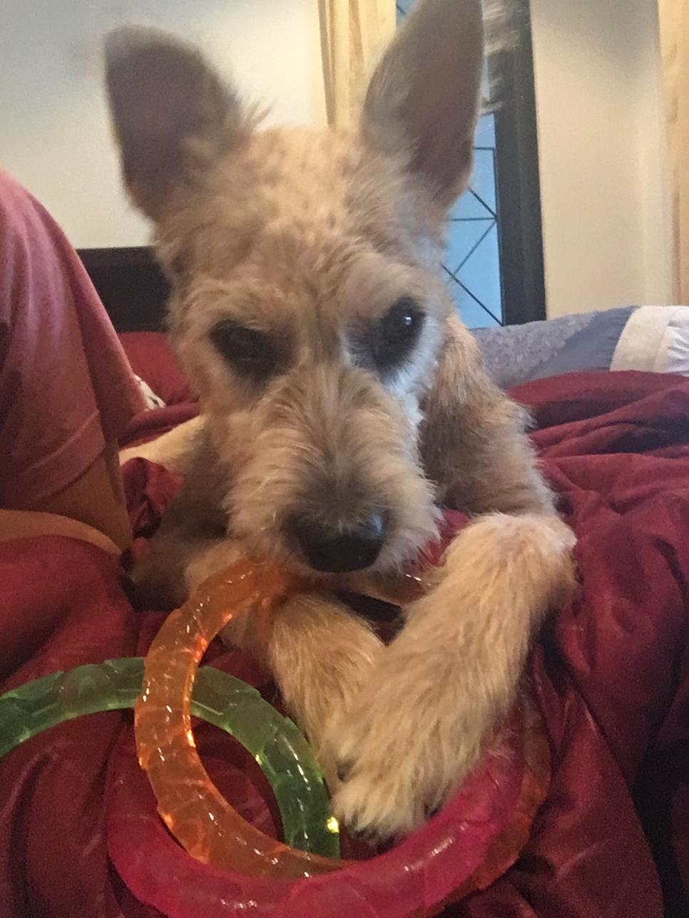 ADOPTED! Meet Bertie