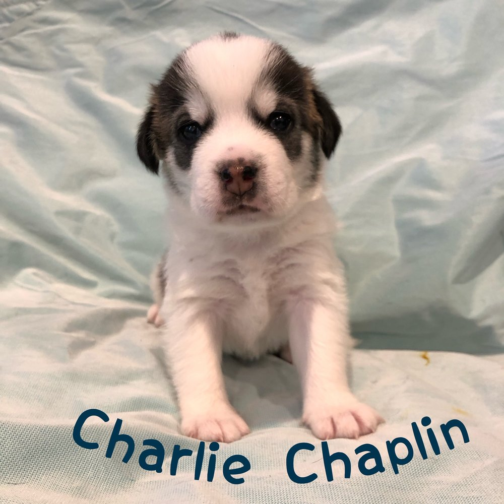 Meet Charlie Chaplin