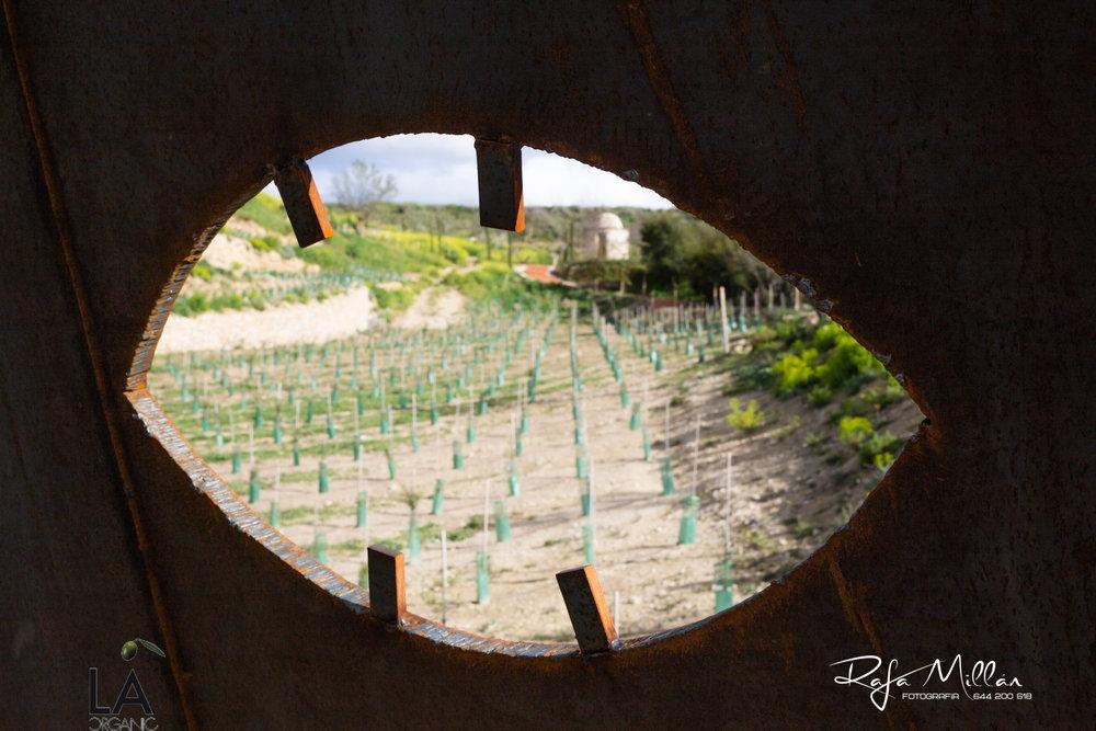 FINCA LA ORGANIC 09042018  Rafa Millan Fotografia 644 200 618  (167 de 236).jpg
