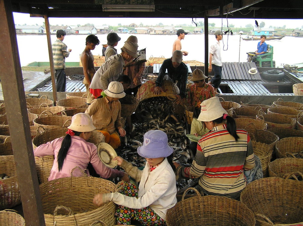 Cambodia fish at landing site.jpg