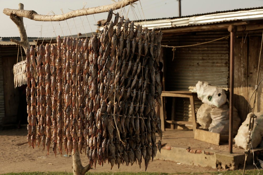 Fish drying, Kachanga, Lake Victoria, Uganda