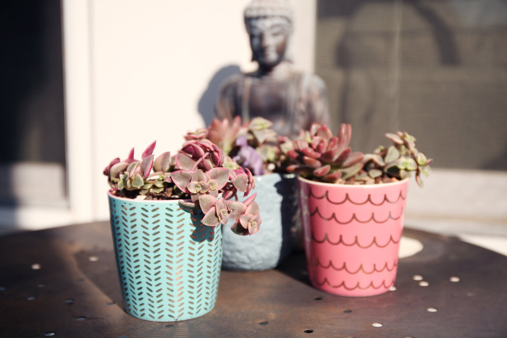 succulents for mermaids