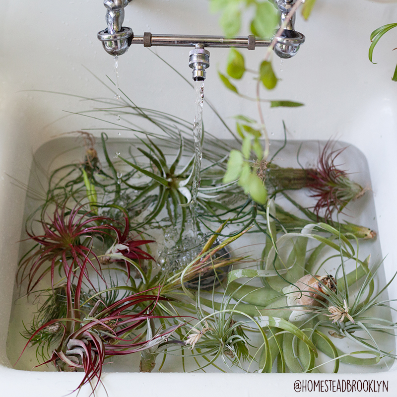 AirPlants.jpg