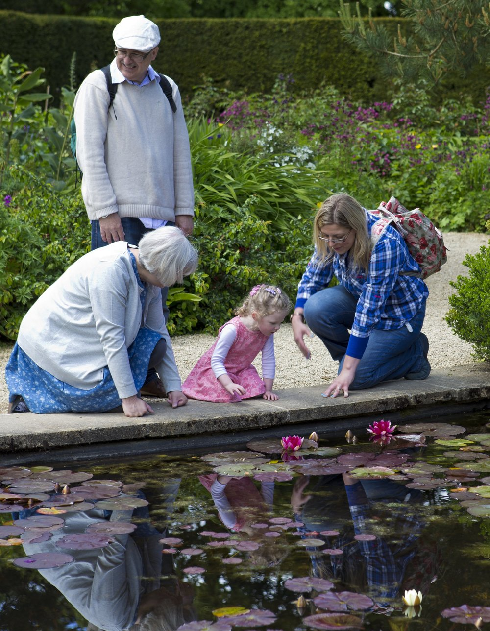 lilly-pond-805207.jpg
