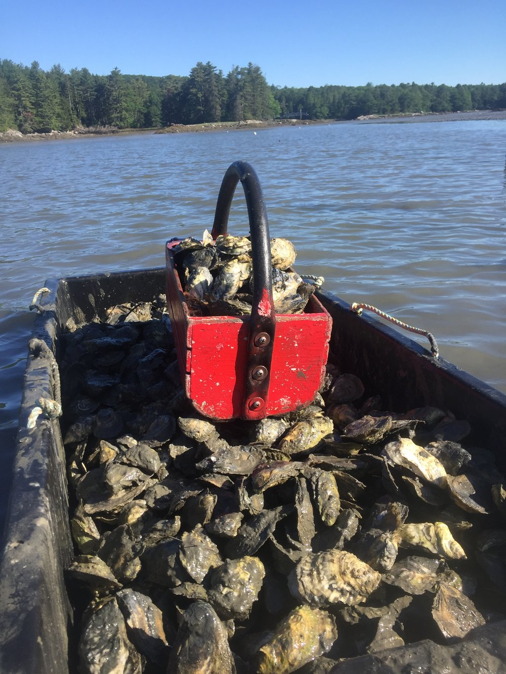 Enjoy our oysters at:  - Damariscotta River Raw BarLost Kitchen- Freedom