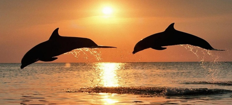 Sunset and Dolphin Trips -