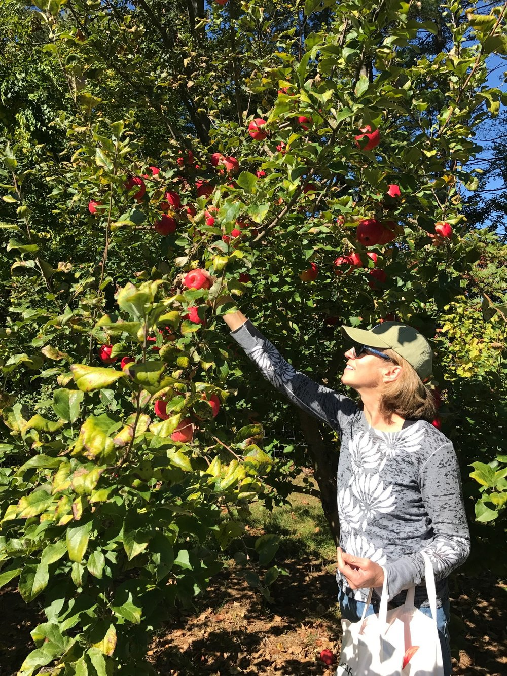 KC_Apple_Picking.JPG