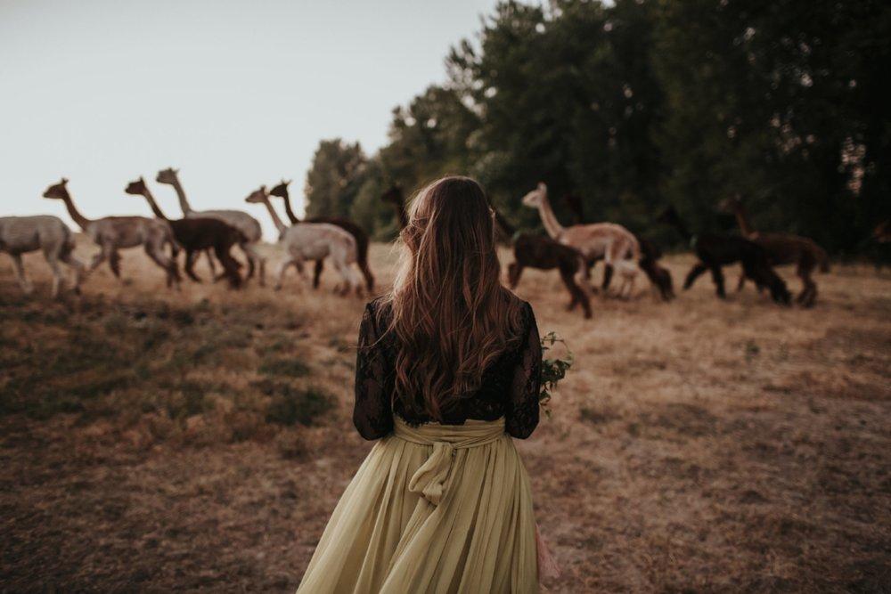 alpaca_styled_shoot_dawn_photo_17.jpg