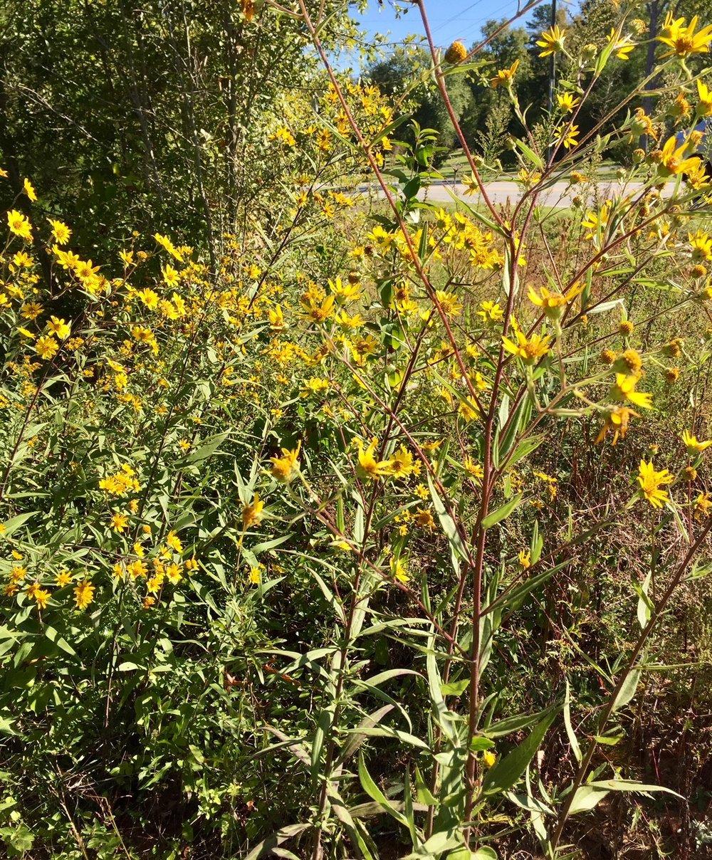 Prairie Restoration -