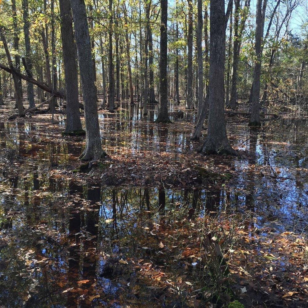 Wetland Restoration -