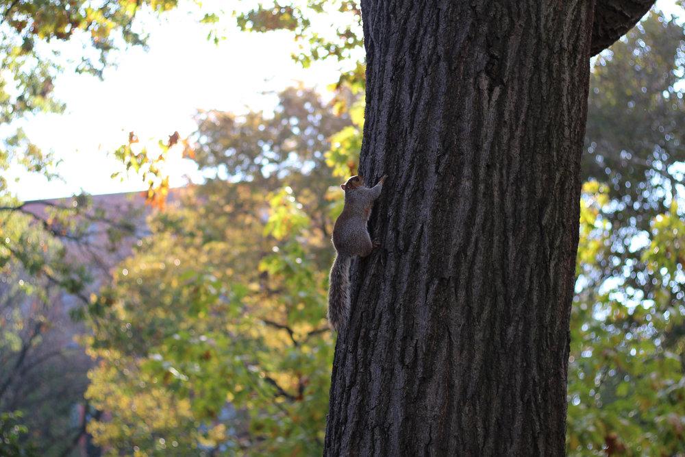 New York squirrel