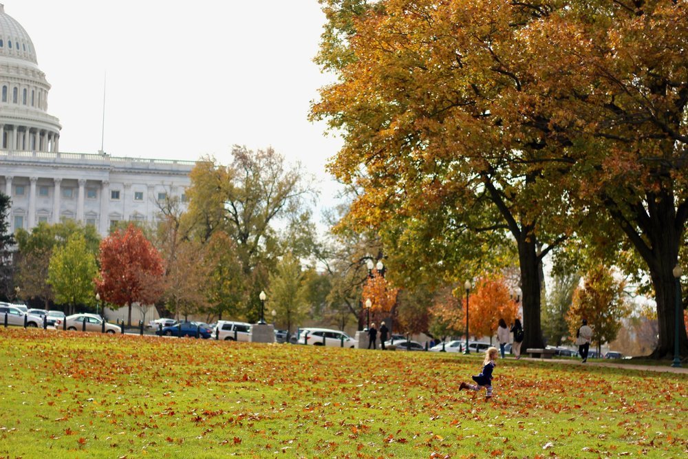 washington national mall
