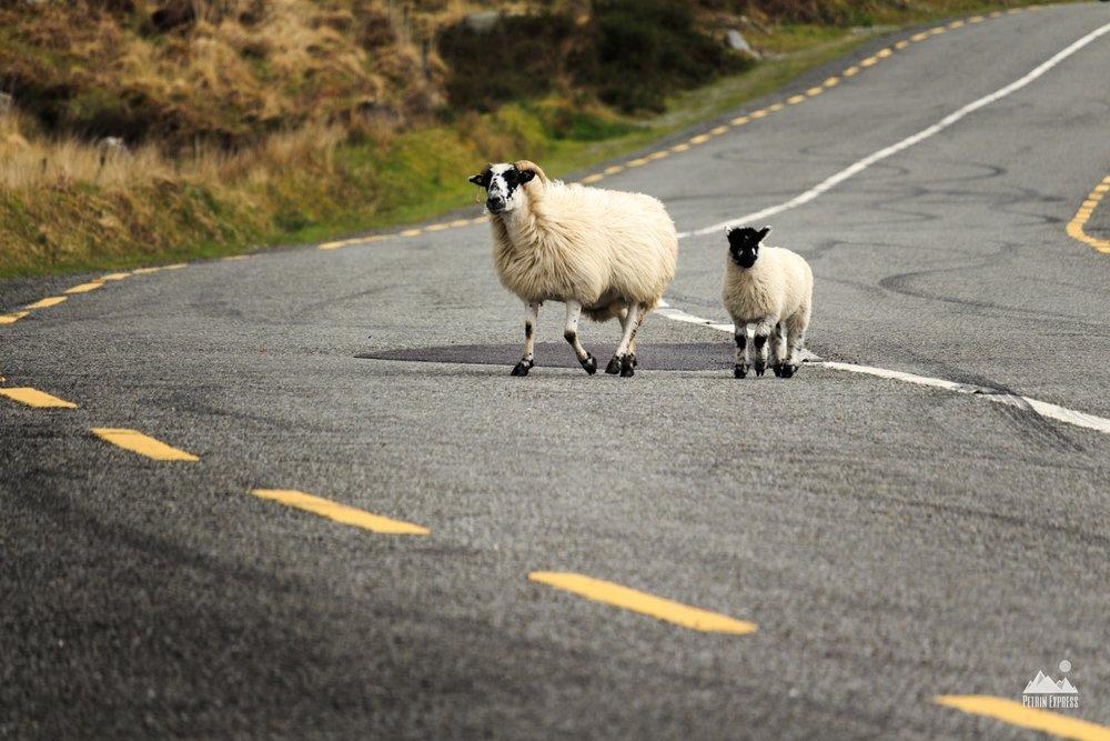 T'inquiète Billy, prends ton temps, on est bien au milieu de la route ! Qu'est-ce qui pourrait mal se passer ?