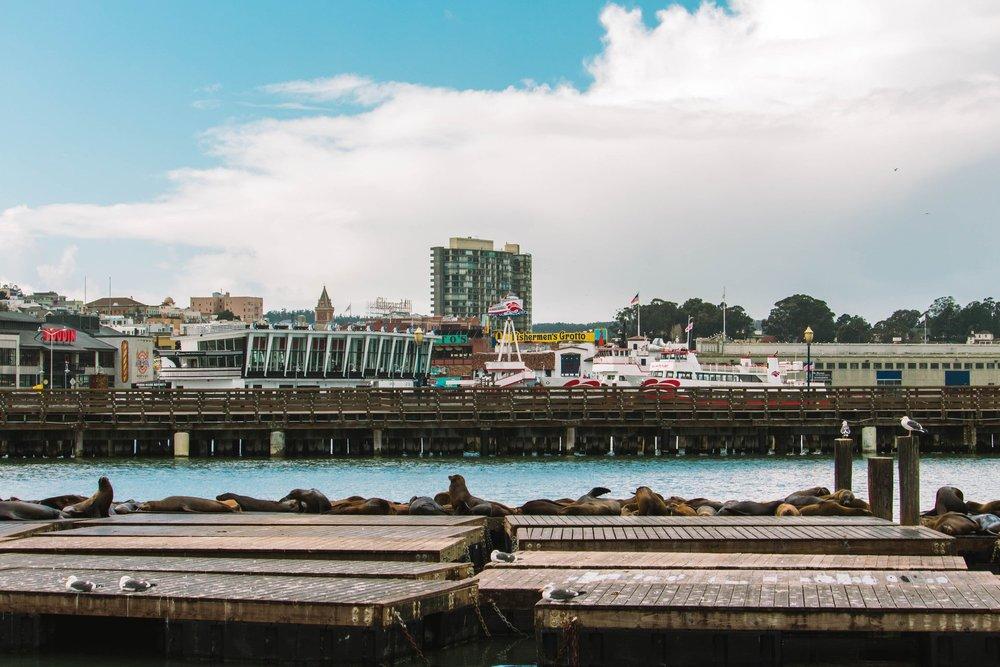 Les lions de mer du Pier 39 | San Francisco