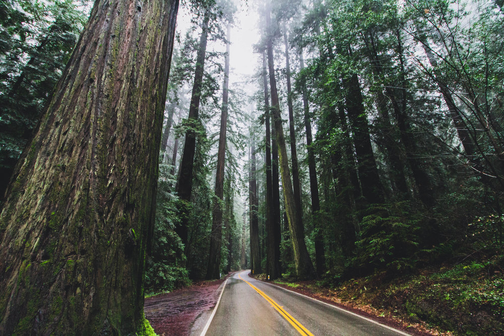 Le parc d'état de Redwood, Californie