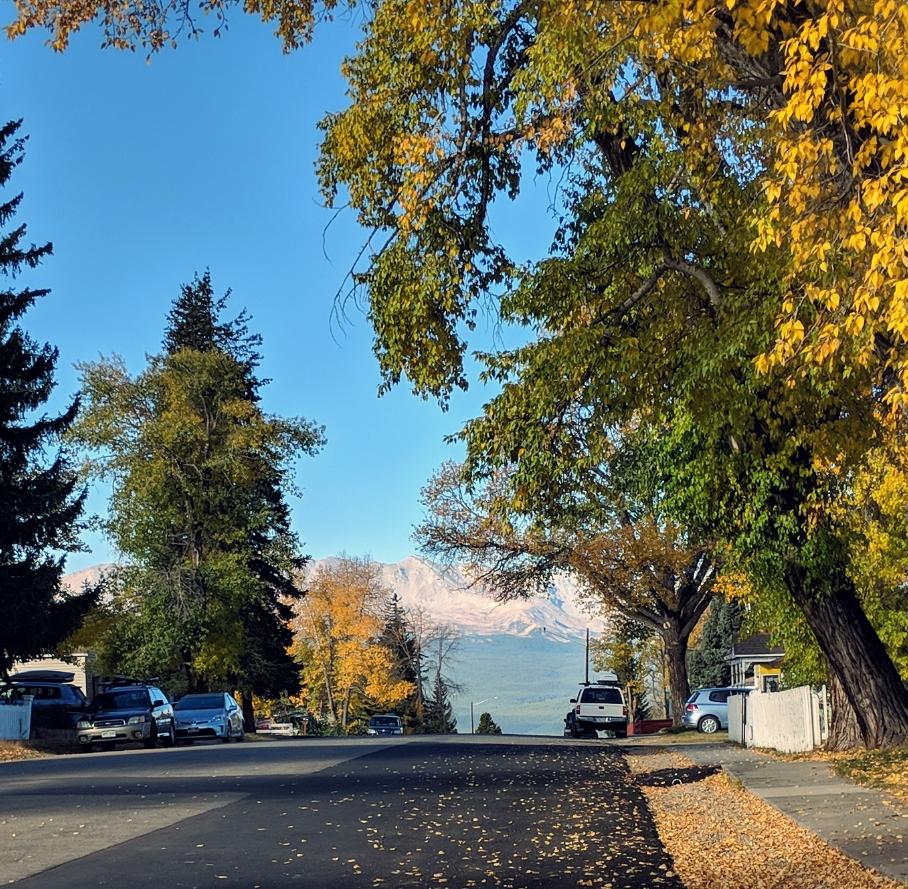 Leadville Leaves.jpg