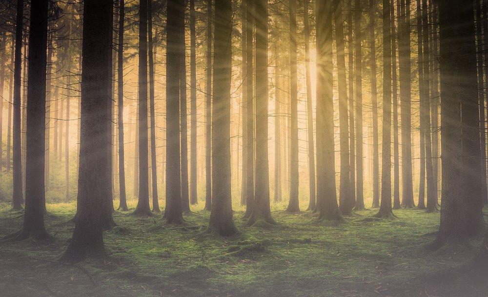 forest-2984960_1280.jpg