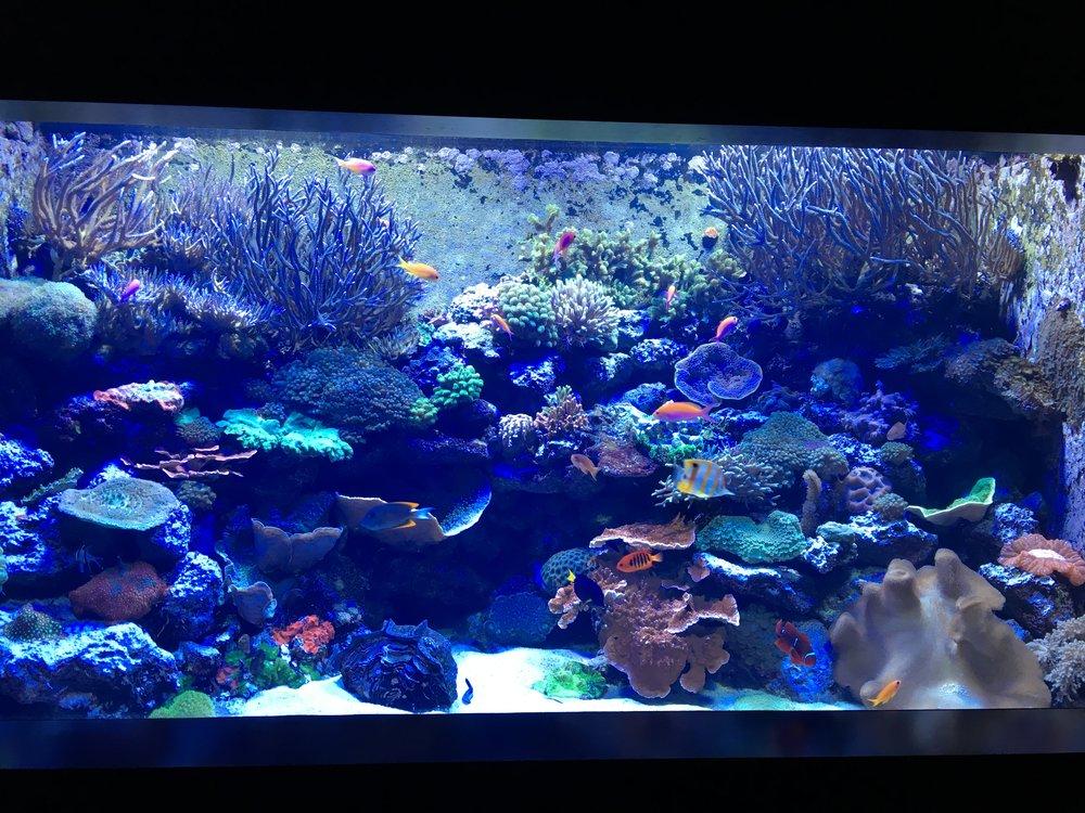 chattanooga aquarium fish.JPG