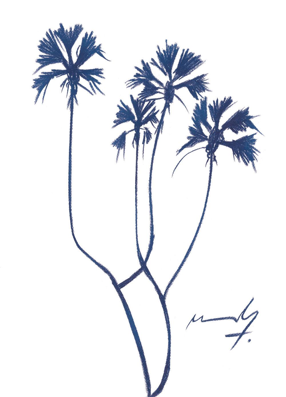 STUDY OF DOUM PALM TREE