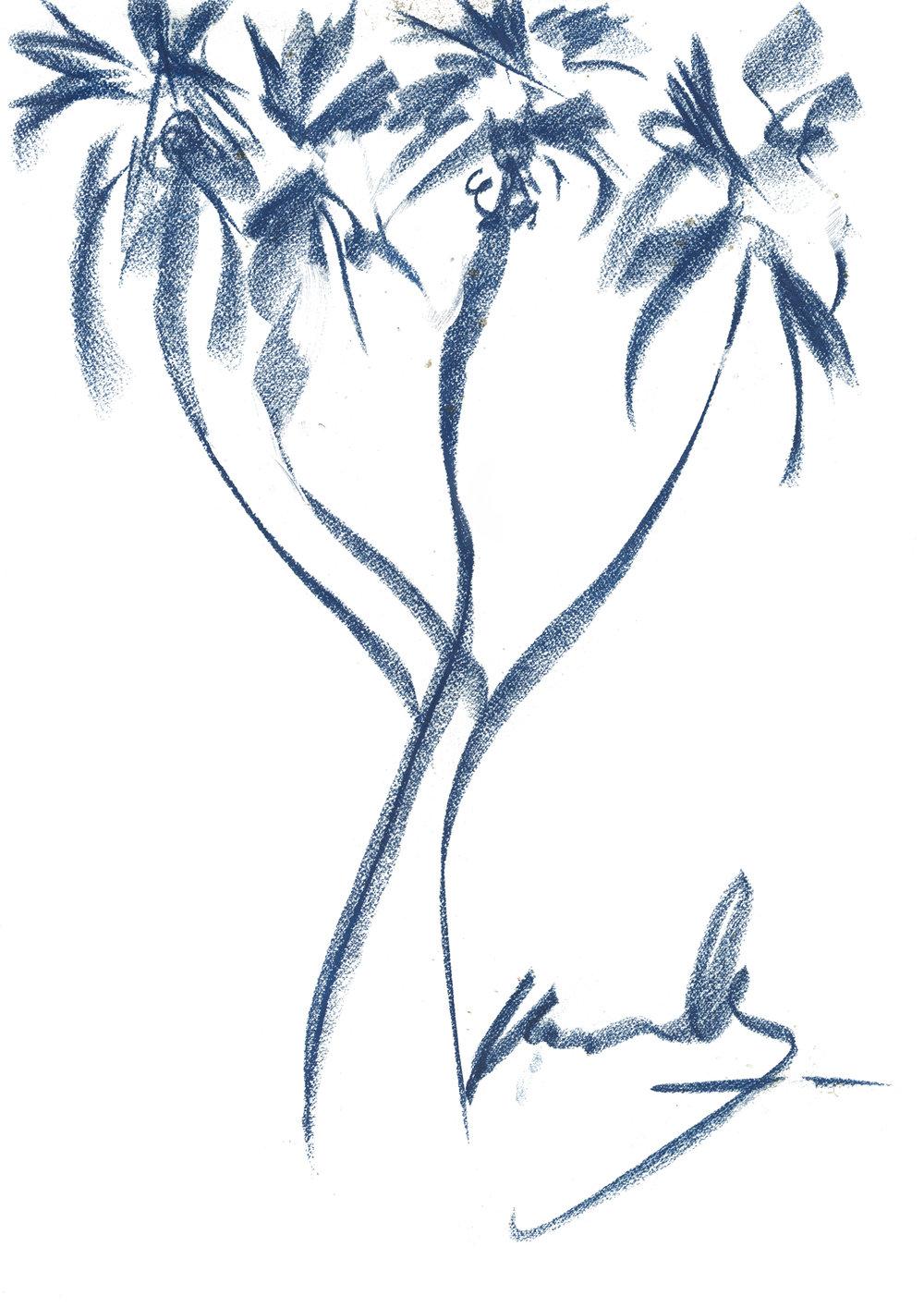 DOUM PALM TREE (HYPHAENE THEBAICA)