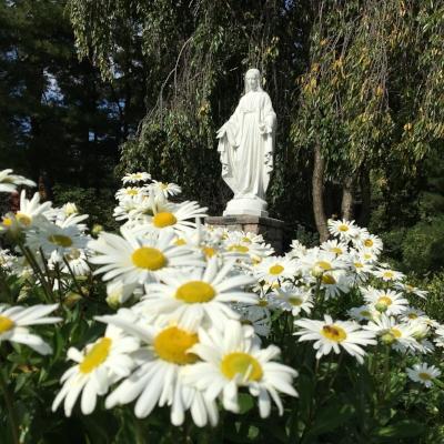 Mary Garden 22.JPG