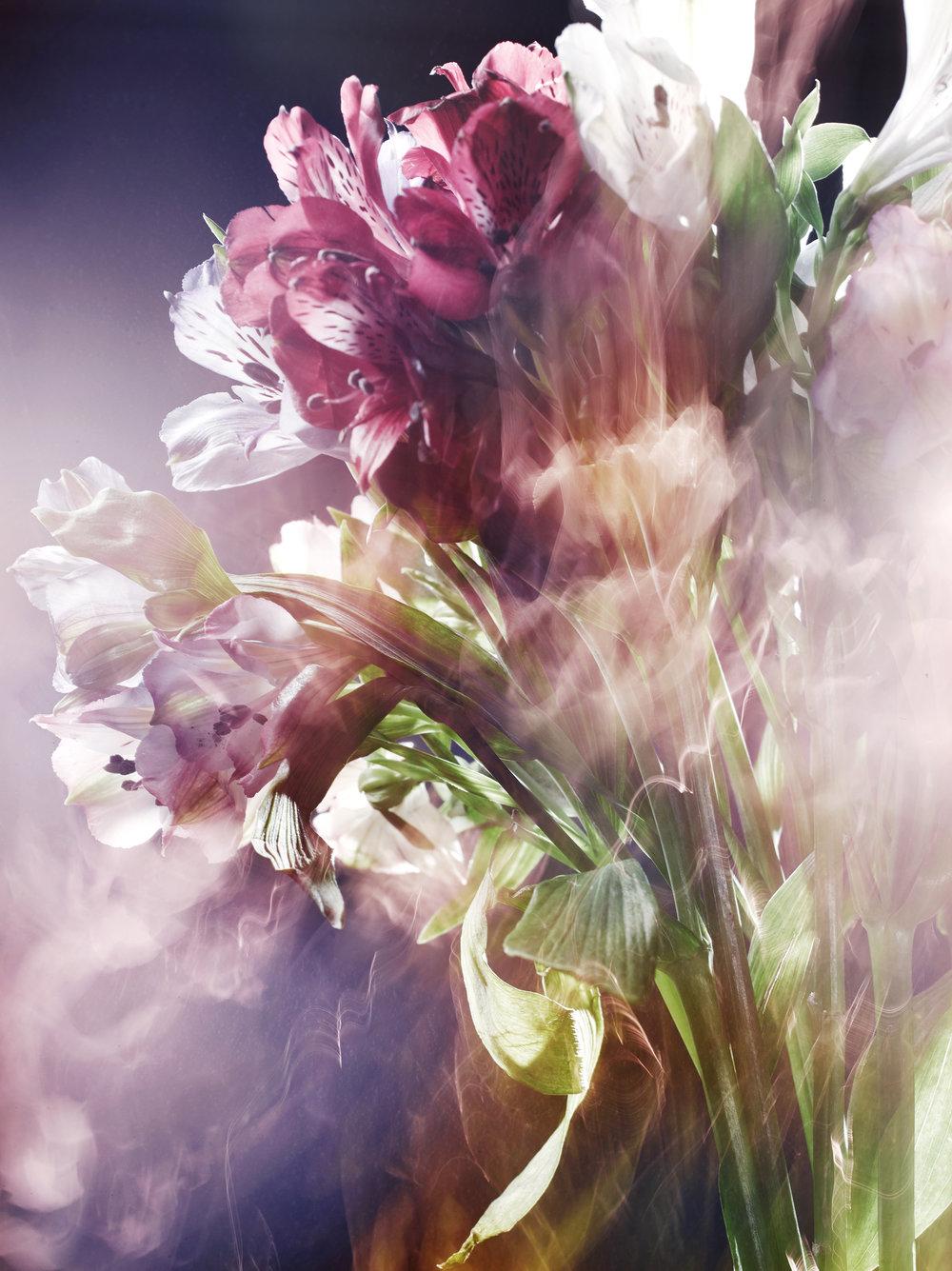 171023_Flowers37180.jpg