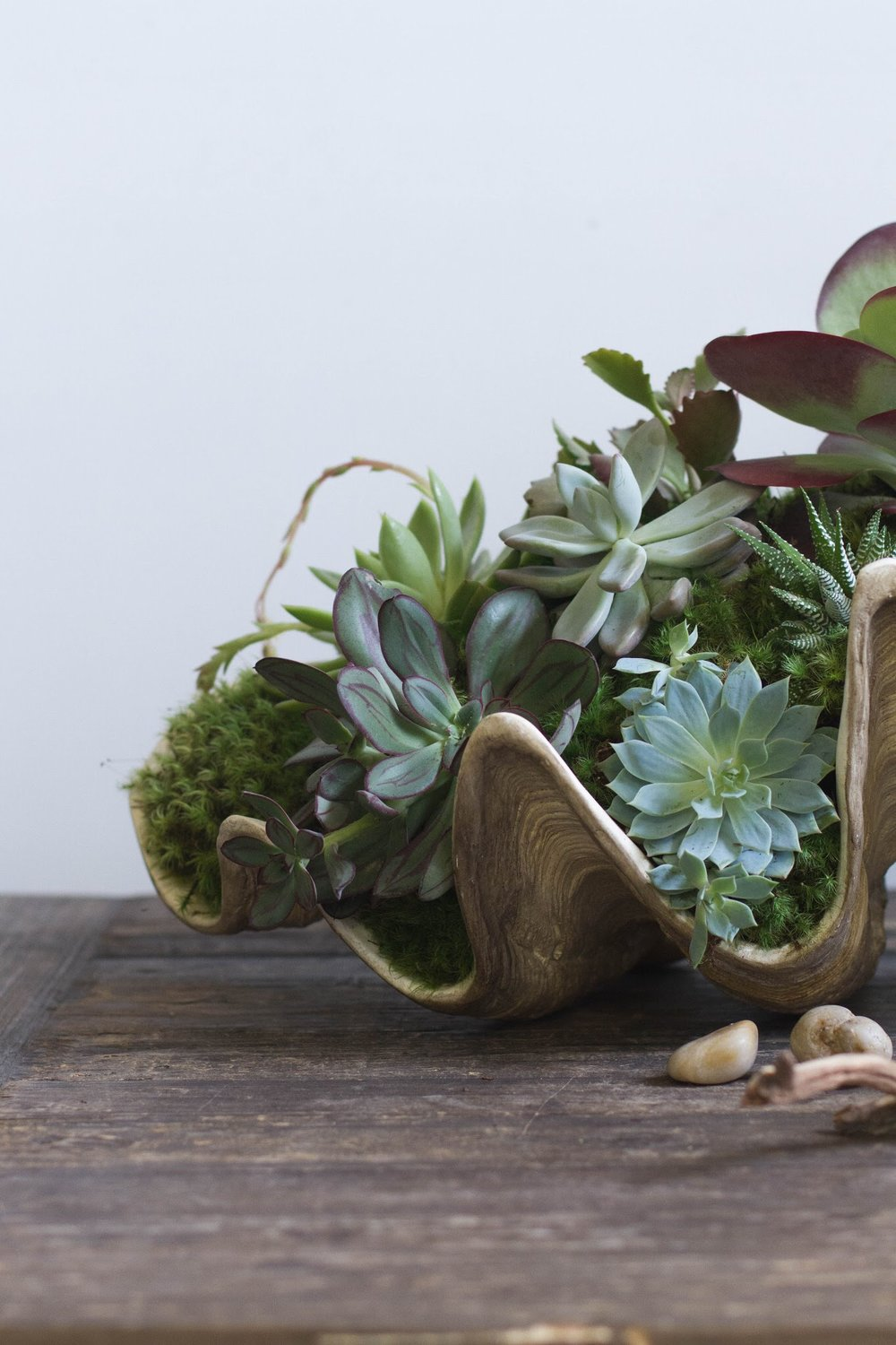 PLANT STYLING -