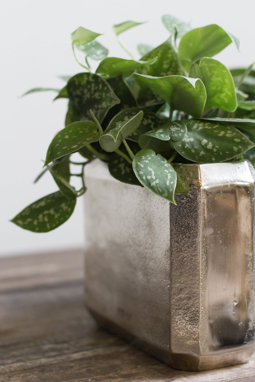 Orly Khon Floral Plant Styling