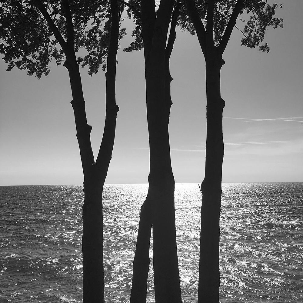 CR bw tree lake 1.jpg