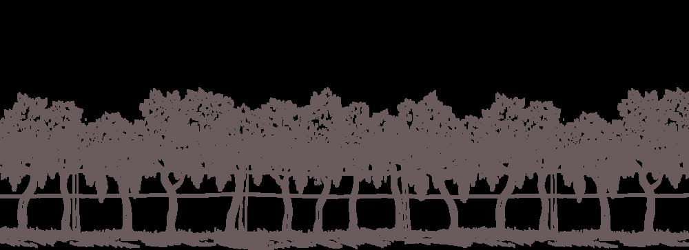 ayres-vineyard-home-illustration-trees.png