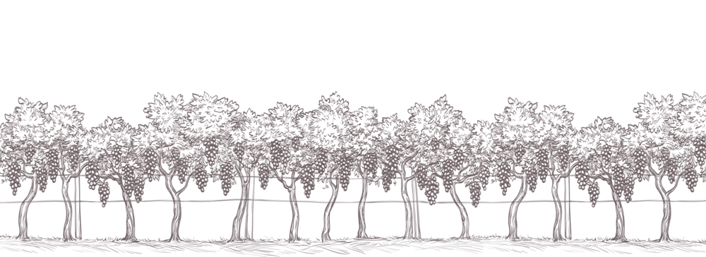 ayres-vineyard-home-illustration-trees.png
